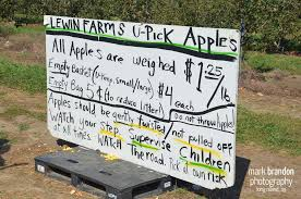 Apple Picking at Lewin Farm in Wading River