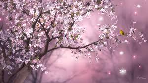 sakura an firefox persona little yellow bird sky pink tree glow dragonflies cherry blooming blossoms desktop flower 1920x1080