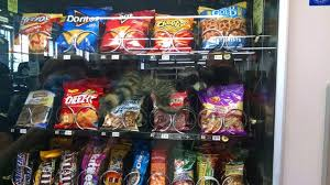 Raccoons In Vending Machine Custom So I Went To Get Some Chips From The Vending Machine At Work WTF