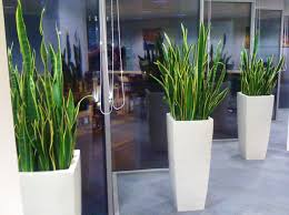 office plants no light. Terrific Indoor Office Plants No Light Sanseveria In A Design: Full Size C