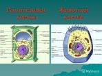 Как сделать модель клетки биология 5 класс