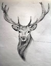 Image Result For Cool Drawings Of Animals Deer Drawing