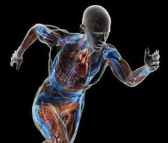 Image result for body energy