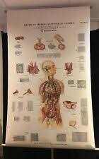American Frohse Anatomical Charts Key Anatomical Chart Anatomical Eye Vision Reference Charts
