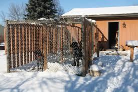dog kennel building tips