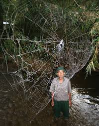 How To Make A Giant Spider Web Photos Worlds Biggest Strongest Spider Webs Found