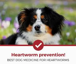 natural heartworm treatment. Best Dog Heartworm Prevention And Medicine Natural Treatment E