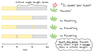 Phototropism Photoperiodism Article Khan Academy