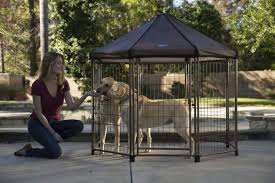 keep your dog safe and protected while limiting its ability to roam freely the problem for many owners of big dogs is that you cannot keep them inside the