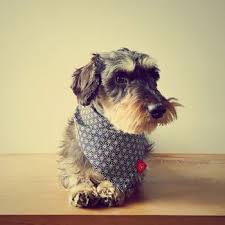 Hexi <b>Japanese Cotton Dog Bandana</b> Hexi <b>Japanese Cotton</b> Dog ...