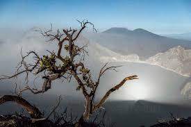 Indonesia, Java, Ijen volcano, close up of barren tree - KNTF03522 -  Konstantin Trubavin/Westend61