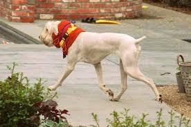make your own soft e collar towel dog cervical neck support make your own soft e collar