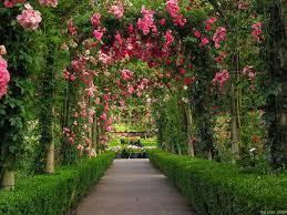 Rose Garden Wallpapers - Top Free Rose ...