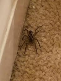 Id Please Tennessee Spiders