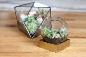 how to make your own terrarium. Modren How Make Your Own Terrarium In 7 Simple Steps In How To R