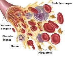 """Résultat de recherche d'images pour """"plasma sanguin"""""""