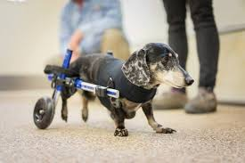 ww three important facebook pages for disabled pets