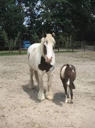 De Paarden En De Therapie Wwwcreatieve Coaching Lemmernl