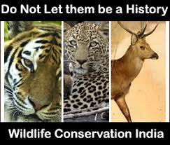 conservation of wildlife a growing concern follow green living wildlife conservation