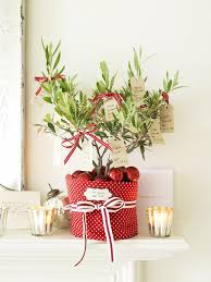 39 Best Plant Idea Images On Pinterest  Plants Potted Plants And Christmas Gift Plants