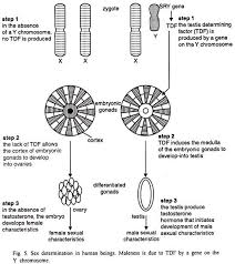 process of sex determination in different species essay biology sex determination in human beings