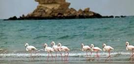 Image result for جزيرة قشم