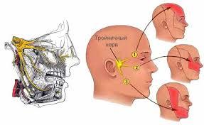 Лечебный массаж при невралгии тройничного нерва Массаж ру  судорожные подёргивания мимических мышц спазм жевательной мускулатуры В комплексном лечении невралгии тройничного нерва массаж занимает важное место
