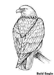 Small Picture Beautiful Bald Eagle Coloring Page NetArt