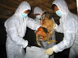 2 mẹ con dính cúm A/H1N1 vì ăn thịt gà chết