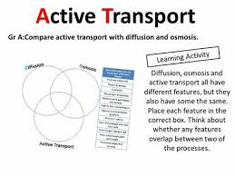 Venn Diagram Of Diffusion Osmosis And Active Transport Venn Diagram Osmosis
