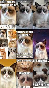 grumpy cat wallpapers latest funny fat and happy grumpy cats photo gallery screenshot