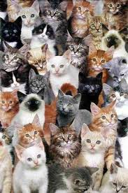 lots of cats tumblr. Exellent Tumblr Donu0027t Follow Unless Ur Name Is Catherine M Shaw Intended Lots Of Cats Tumblr Y