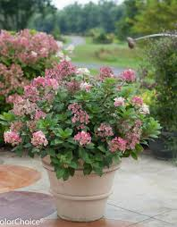 potted perennials and shrubs