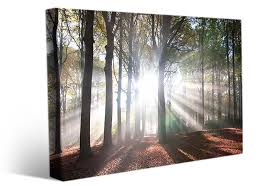 large landscape canvas prints sunlight forest landscape wall art sun rays break through tall trees in forest