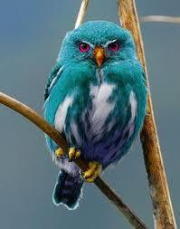 309 Best Everything <b>Owls</b> images   <b>Owl</b>, Beautiful <b>owl</b>, <b>Owl</b> art