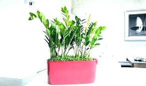 Office cubicle plants Tends Low Light Office Plants Best Plant For Good Small Indoo Either You Want Small Office Cubicle Plant Vexxthegamecom Either You Want Small Office Cubicle Plant Or Big For Your Plants