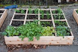 Small Picture Garden Raised Beds YouTube
