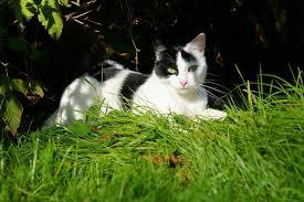 Katze Abkühlen Bei Hitze Die 5 Besten Tipps
