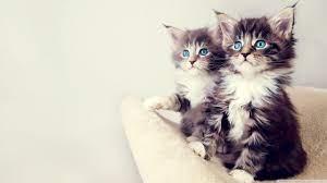 Cute Kittens HD Wallpapers - Wallpaper Cave
