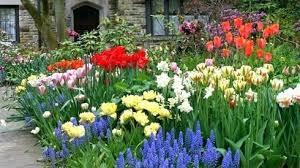 garden auger. Garden Auger - Hotcanadianpharmacy.us
