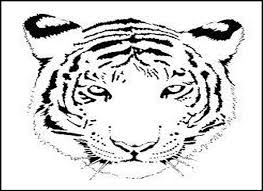 Small Picture tiger coloring pages for kids click the siberian or amur tiger