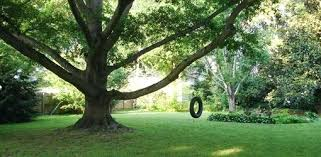 tire swing attached to oak tree for s wooden swings australia how install a safely tree swing