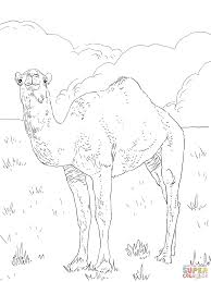 Small Picture Dromedary Arabian Camel coloring page Free Printable Coloring Pages