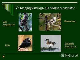 Презентация на тему Определение местных птиц по пению класс  8 Голос какой птицы вы сейчас слышите Сыч мохноногий Чернеть белоглазая Ополовник Грач