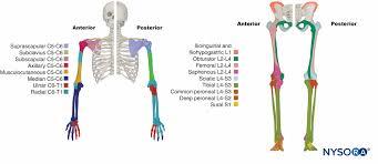 Functional Regional Anesthesia Anatomy Nysora