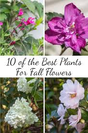 fall garden flowers. 10 Of The Best Plants For Fall Flowers Garden \
