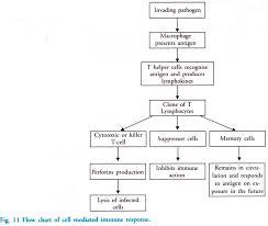 Explanatory Immune System Flowchart Worksheet Bio Flowchart
