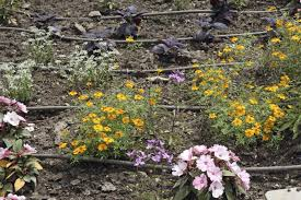 gardening without water how to garden in a drought