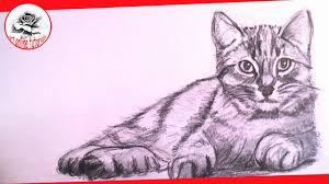 realistic cat drawing in pencil. Perfect Pencil How To Draw A Realistic Cat With Pencil Step By  Drawing The Easy Way With In