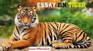 tiger essay tiger